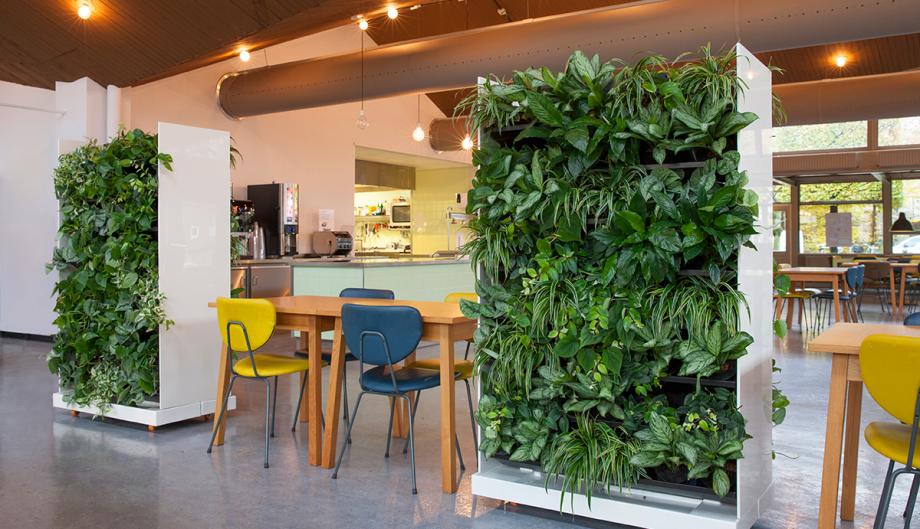 Plantas para oficinas muros vegetales for Plantas de interior para oficina