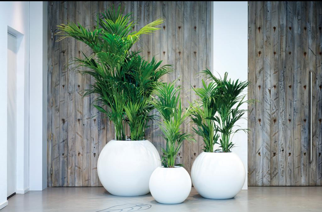 Plantas para oficinas decoraci n con plantas barcelona for Plantas decorativas para oficina